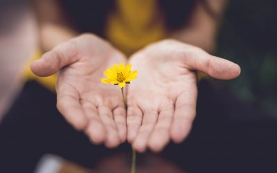 Forgiveness and Its Powerful Effects on Productivity