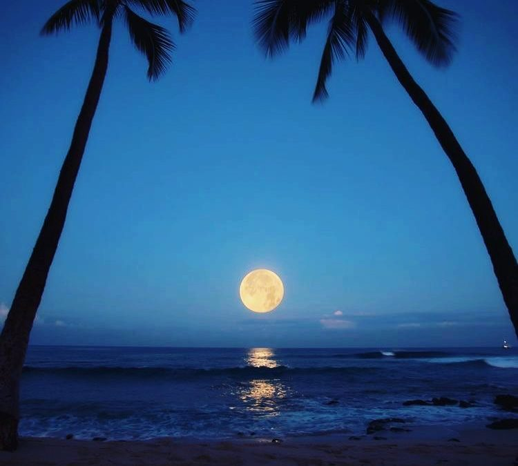 Two palm trees and a full moon